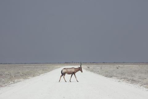 Winnaar Landschap: Maroesjka Lavigne, België
