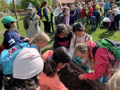 5500 andraklassare bygger insektshotell i Skånes Djurpark