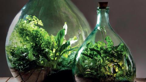 Ett litet grönt mikrokosmos på flaska