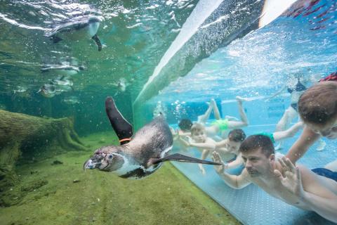 Die Spreewelten 2.0 – ein Familienbad wird zum Pinguinland