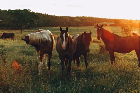 Hemester och hästar – stort intresse för årets Hästrunda