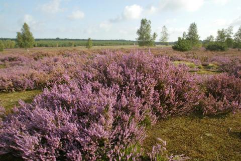 Heidelandschaft Naturpark Niederlausitzer Heidelandschaft
