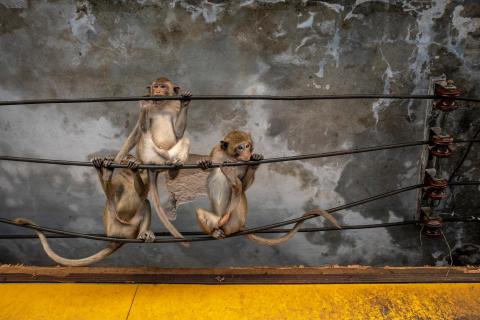 © Joan de la Malla, Spain, Shortlist, Professional competition, Natural World & Wildlife, 2020 Sony World Photography Awards (2)