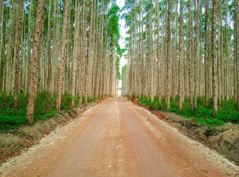 Brazil seeks innovations and international  partnerships at Elmia Wood