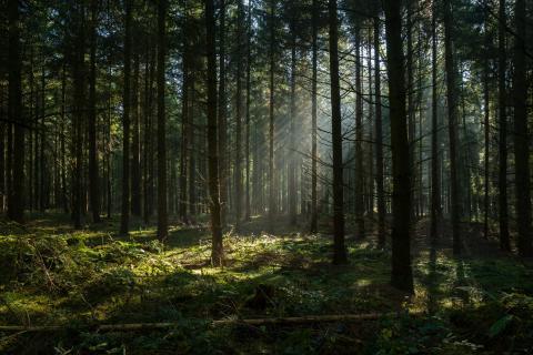 Scandic menee metsään – Johtajuutta kehitetään Evon Johtajatulilla