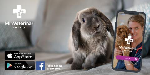 Min Veterinär – nu kan djurägare träffa Evidensias veterinärer även i mobilen