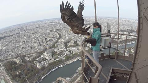 Tour Eiffel - eagle