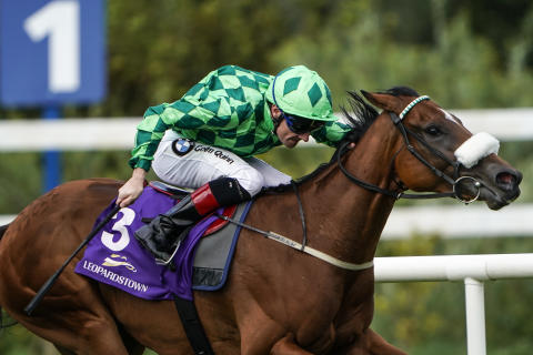 Alan Crowhurst - Leopardstown (3)