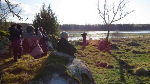 Brittisk gruppresa vid Hornborgasjön 2019