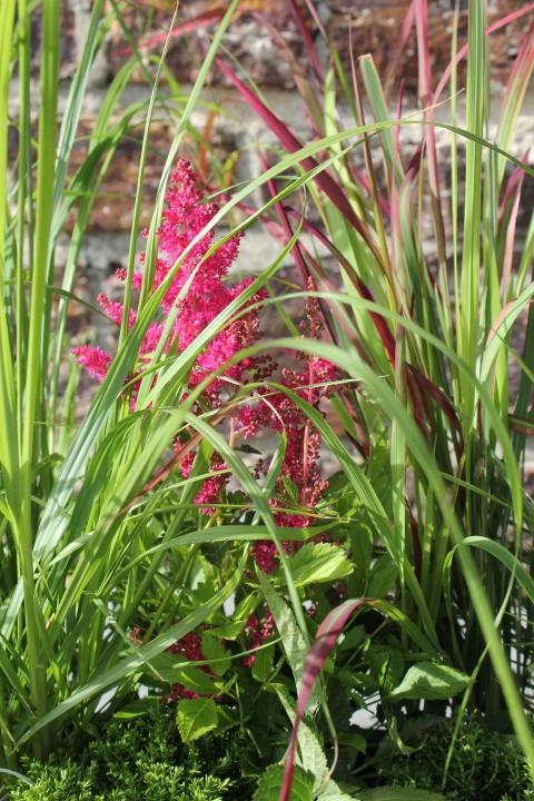 Sensommarplantering med gräs