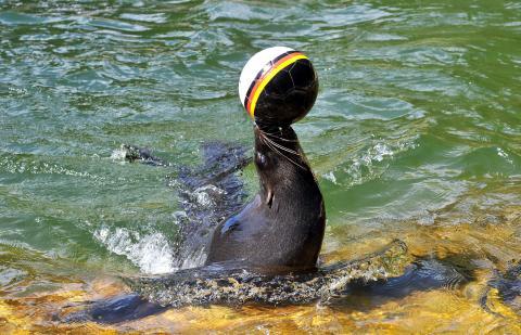 Zoo-Orakel: Olé, olé, endlich wieder Fußball-WM
