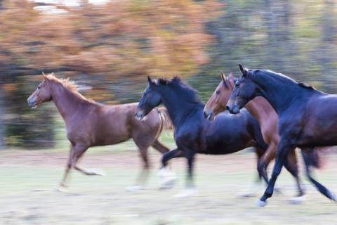 Var uppmärksam på sårskador på din häst!