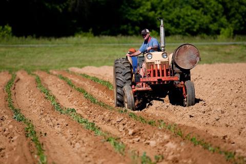 Veterantraktorer og landbrugsredskaber er populære