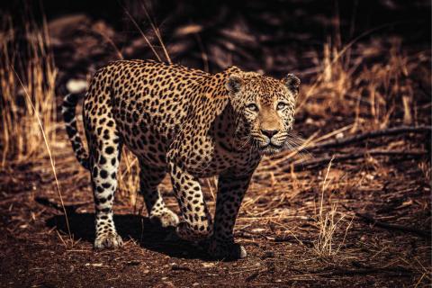 Alphaddicted_Roadtrip Namibia_31