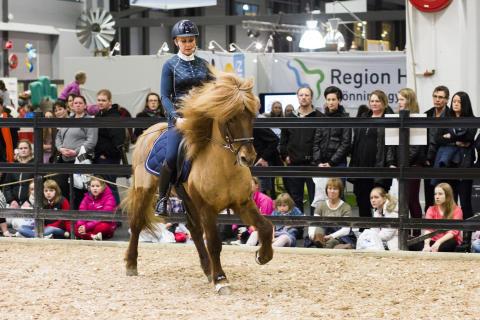 Islandshäst clinic på EuroHorse 2014