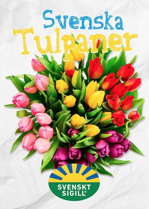 Svenska Tulpaner utomhuskampanj 2016