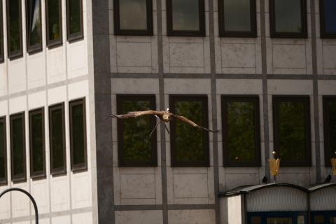 Adlerflug_Köln_Freedom_von Sony_02
