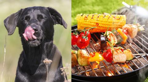 Grillrester farliga för hunden
