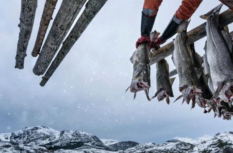 Derfor blir 2021 et krevende år for torsken