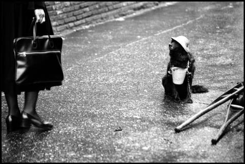 Elliott Erwitt_ITALY. Rome. 1978.