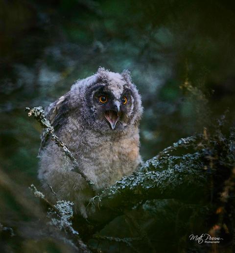© Mati Puum, Estonia, Shortlist, Open competition, Natural World & Wildlife, Sony World Photography Awards 2021