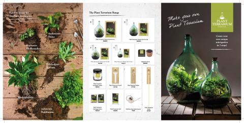 Plant Terrarium