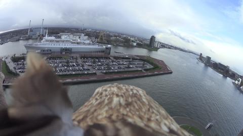 Freedom Rotterdam