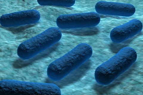 Små upptäckter kan göra stor skillnad – Crohns sjukdom samt blodförgiftning och resistens i centrum när Läkaresällskapet delar ut priser