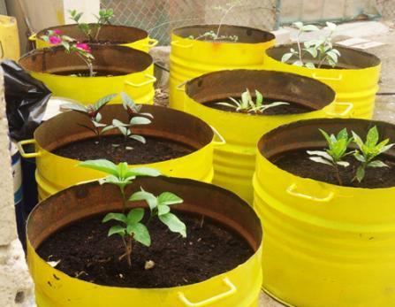 Salalah port sows seeds of a greener future