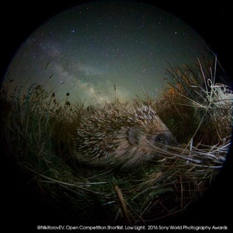 ©Egor Nikiforov, Open Low Light category, 2016 Sony World Photography Awards