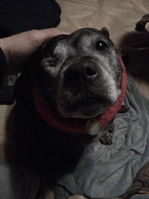 Appeal after dog dragged along road by van
