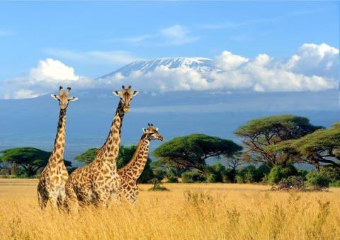 Travel Africa Network choisit la position HOTBIRD d'Eutelsat pour lancer la première chaîne HD africaine dédiée aux