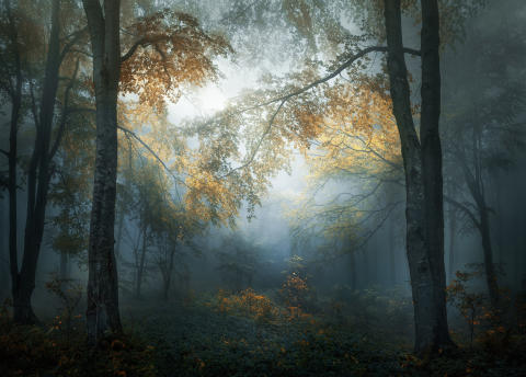 © Veselin Atanasov, Winner, Open Landscape & Nature and Winner, Bulgaria National Award, 2018 Sony World Photography Awards