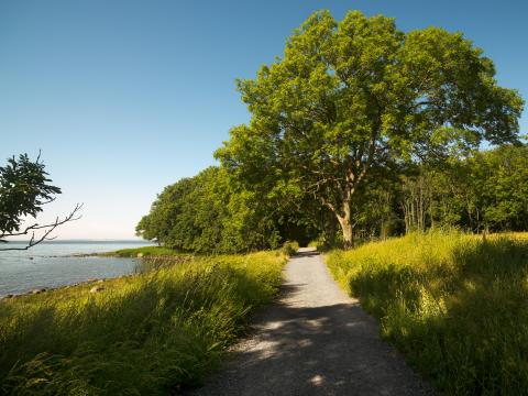 Utstikt fra Jeløya