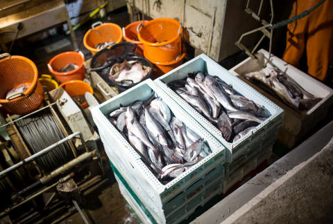 """HaV inför nytt system att spåra fiskeri- och vattenbruksprodukter: """"Underlättar för konsumenter som vill göra medvetna val"""""""