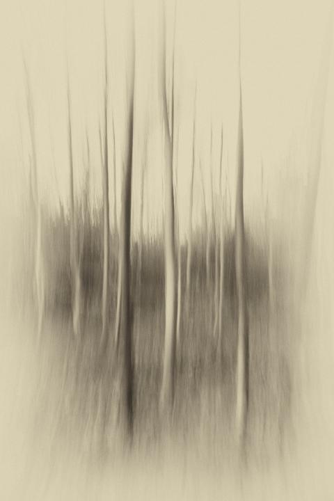 ©Ole Steen Petersen, Open-konkurrence - 'Motion', SWPA 2018