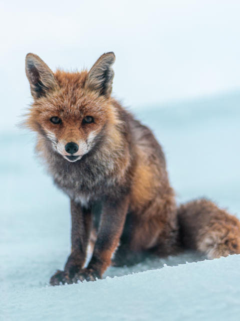 © Emil Holthausen, Germany, Shortlist, Youth competition, Natural World & Wildlife, Sony World Photography Awards 2021
