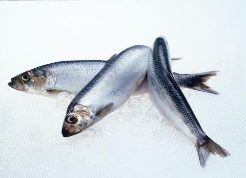 Norwegian pelagic exports reduced in October
