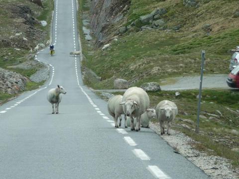 1 av 5 bilførere stopper ikke etter å ha kjørt på dyr