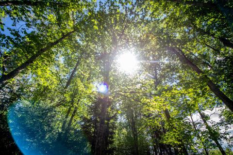 JYSK/DÄNISCHES BETTENLAGER verwendet künftig zu 100 % nachhaltig wachsendes Holz