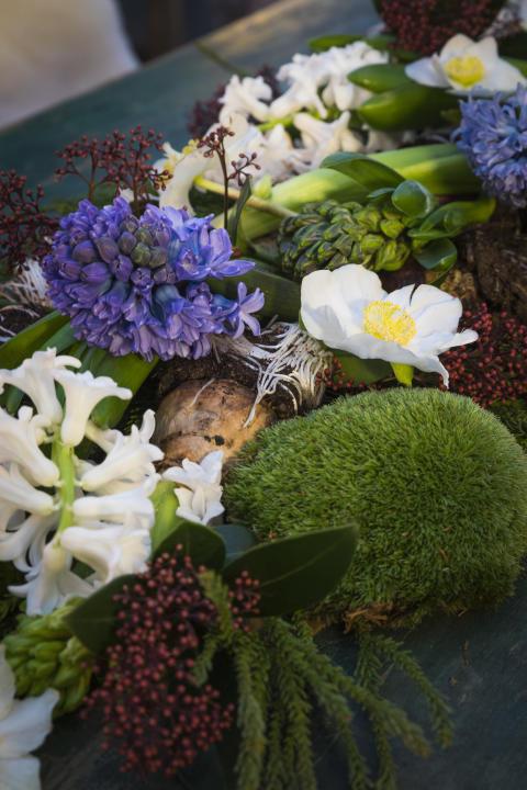 Svenskodlade hyacinter och julrosor med Karl Fredrik på Eklaholm