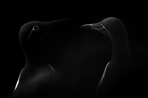 Las imágenes más impresionantes ganan el concurso Open de los Sony World Photography Awards 2019