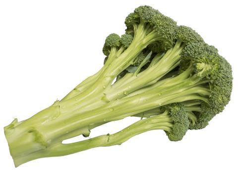 Broccoloco 2