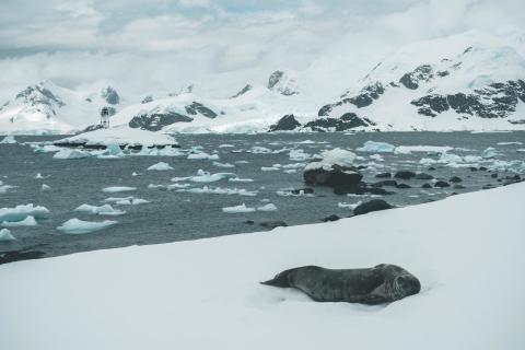 Sony_Alphaddicted_Antarktis_Michael Ginzburg_07