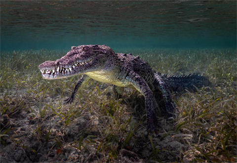 © David Keep, United Kingdom, Shortlist, Open competition, Natural World & Wildlife, 2020 Sony World Photography Awards