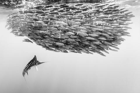 © Christian Vizl, Mexico, 2nd Place, Professional competition, Wildlife , 2019 Sony World Photography Awards (2)