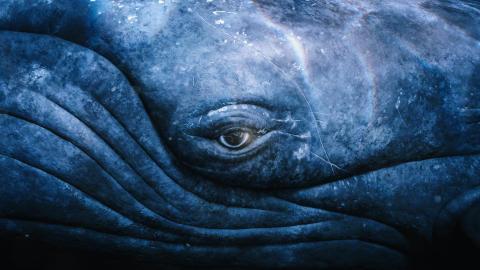 Ocean.Dome Whale Eye