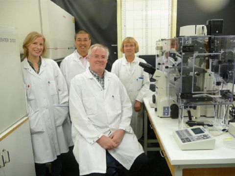 Celltransplantation kan bota dövhet
