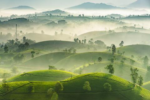 LongCoc Mountain Tea