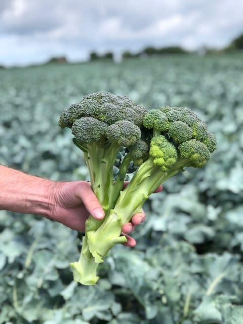 Broccoloco i fält